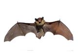 Bat Problem