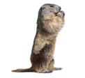 Groundhog Problem