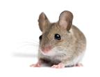 Mouse Problem