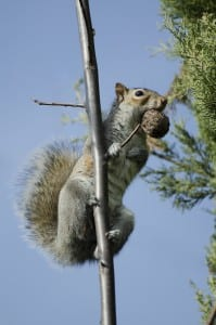 How To Manage Squirrels In Your Property
