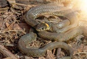 snake in house