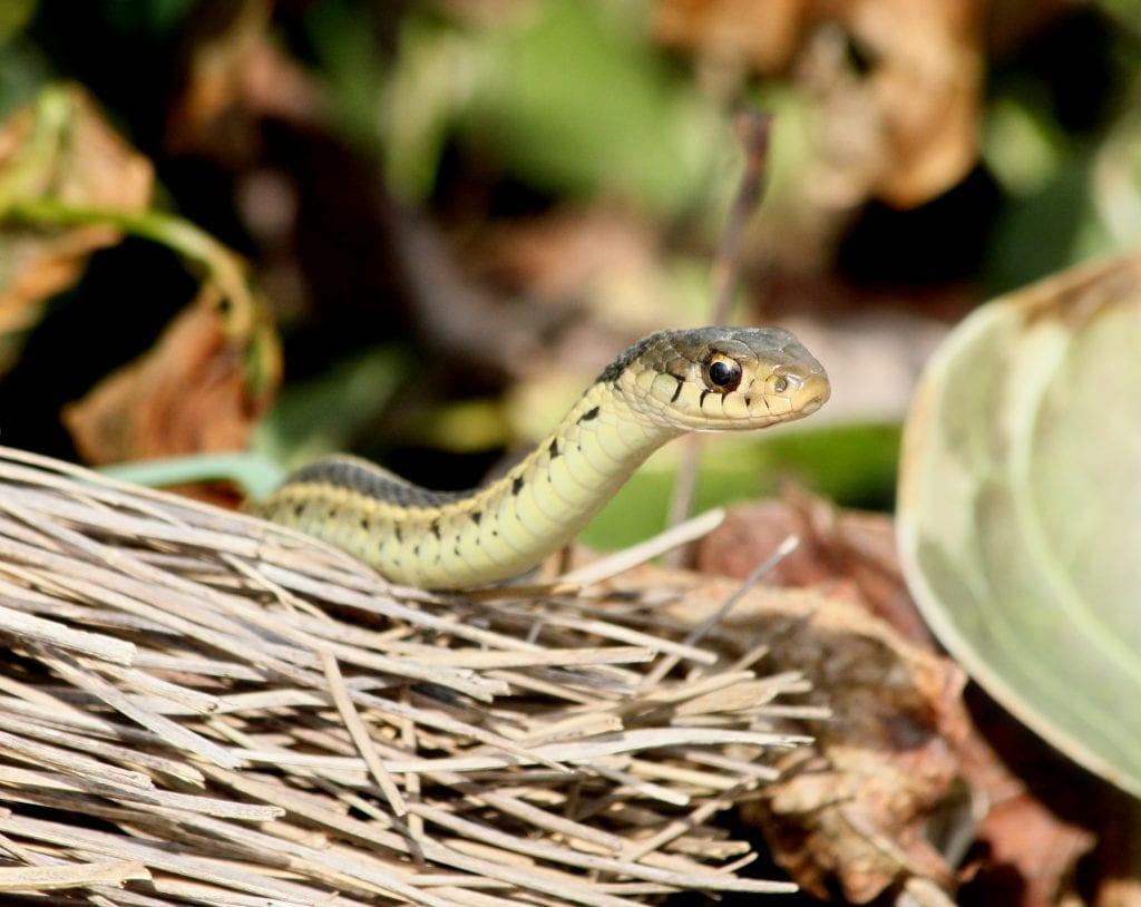 Keep Snakes Away