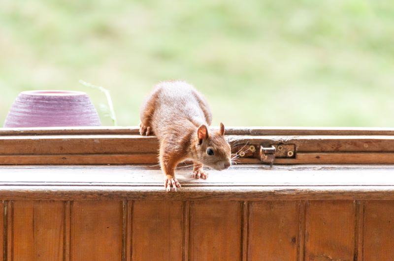 squirrels trespassing