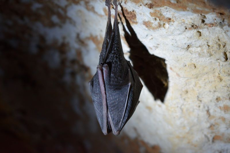 Bat In My House