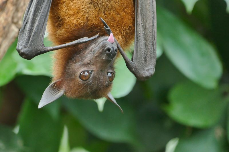 contact with bats
