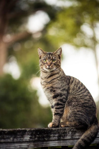 Is It Safe To Leave Food Out For Stray Cats?