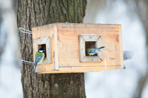 Things Homeowners Can Do To Protect Birds