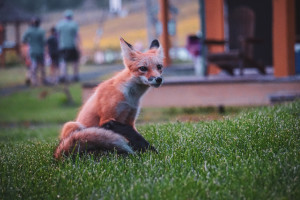 Can I Keep A Wild Animal As A Pet?