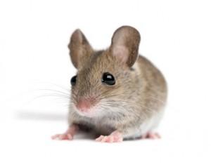 Call Shumaker Animal Control to take care of Mice